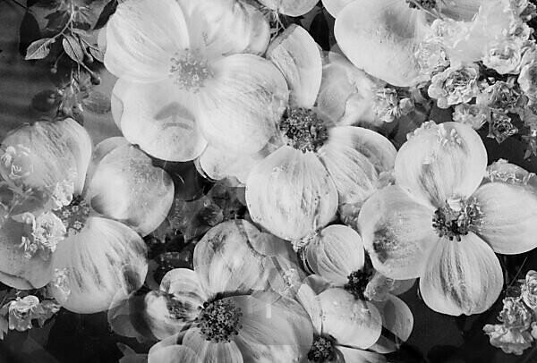composing, flowers, detail, b/w