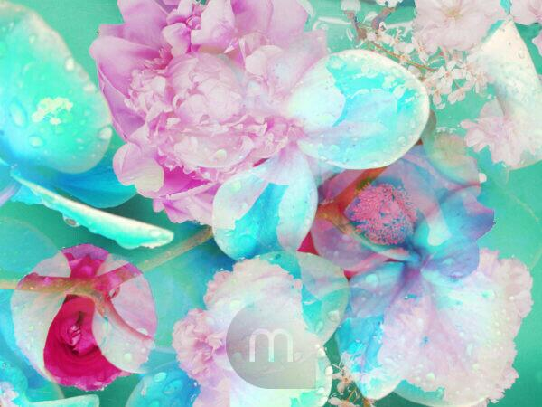 composing, flowers, different, pink, detail, turquoise,