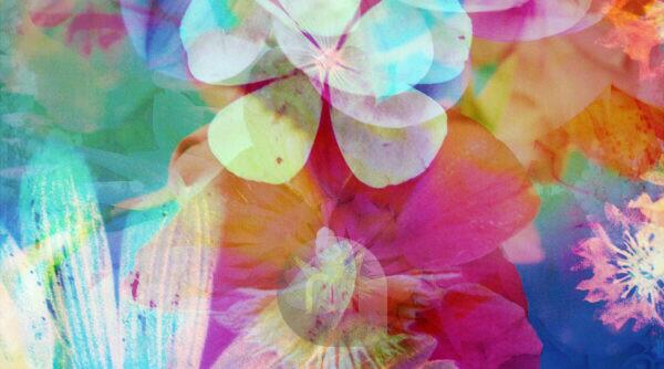 composing, flowers, different, detail,
