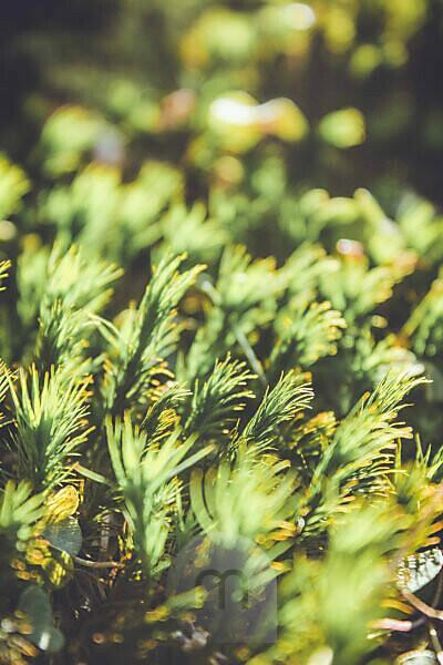 Forest soil, green