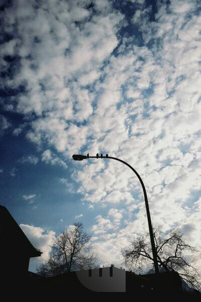 4 pigeons sitting on a street lamp, blue cloud sky