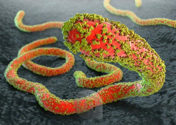 Ebola viruses with glycoproteins on gray tissue background