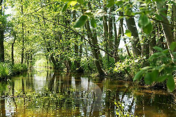 Biosphere reserve Schorfheide-Chorin, Oberucker lake, Ucker canal, Erlen