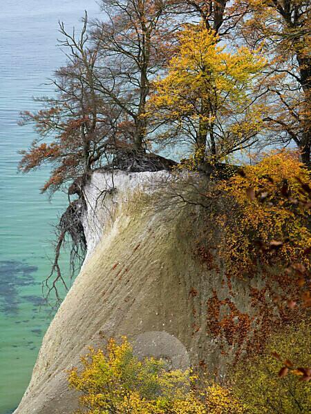 Europa, Deutschland, Mecklenburg-Vorpommern, Insel Rügen, Nationalpark Jasmund, UNESCO-Weltnaturerbe Europäische Buchenwälder, herbstbunte Rotbuchen an der Steilküste