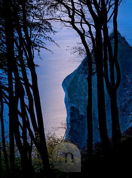 Europe, Germany, Mecklenburg-Western Pomerania, Island of Rügen, Jasmund National Park, UNESCO World Natural Heritage European beech forests, autumn-coloured copper beeches on the steep coast at the Wissower Klinken, moonlight
