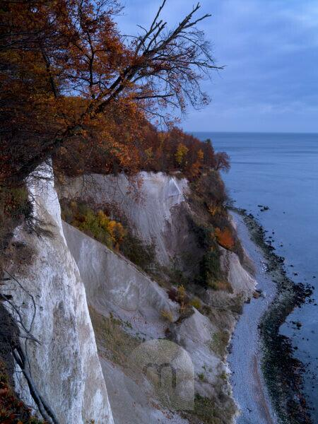 Europe, Germany, Mecklenburg-Western Pomerania, Island of Rügen, Jasmund National Park, UNESCO World Heritage Site European beech forests, autumn-coloured beech trees on the steep coast