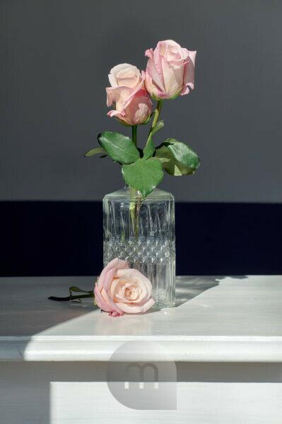 Roses in front of and in glass vase