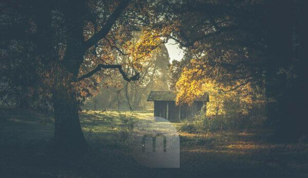 A wooden hut stands in a clearing and is illuminated by the sun,