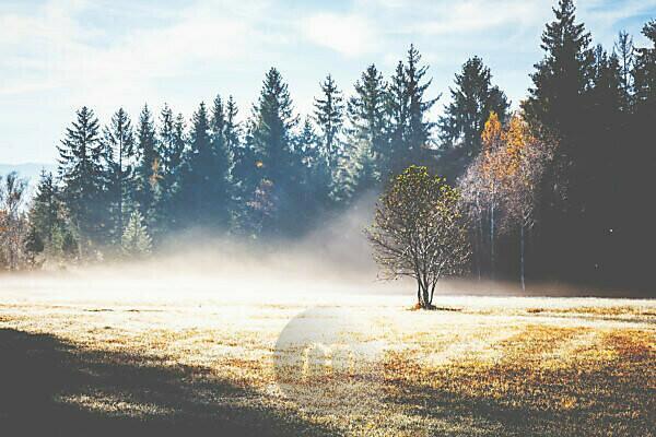 Ein einzelner junger Baum steht auf einer Lichtung im Nebel, darüber die Sonne,