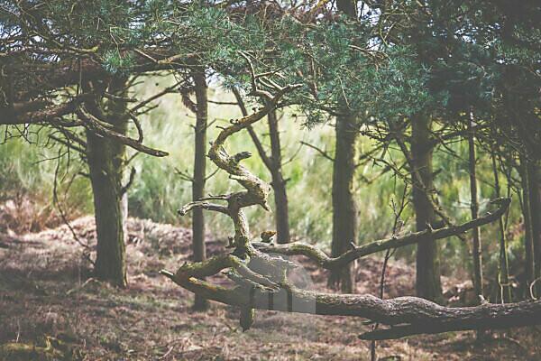 Einblicke in den Wald - ein Naturdenkmal auf Hiddensee