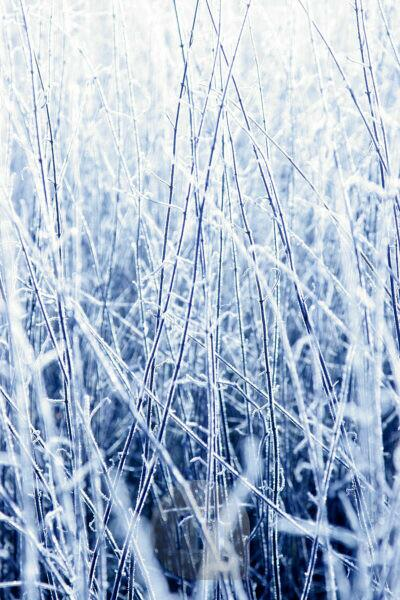 Grass, frost, ice, winter