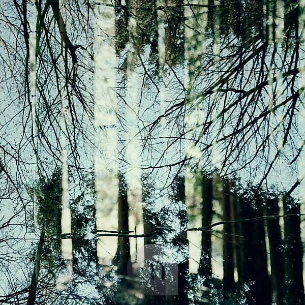 Frühlingssonne im März im Teutoburger Wald,