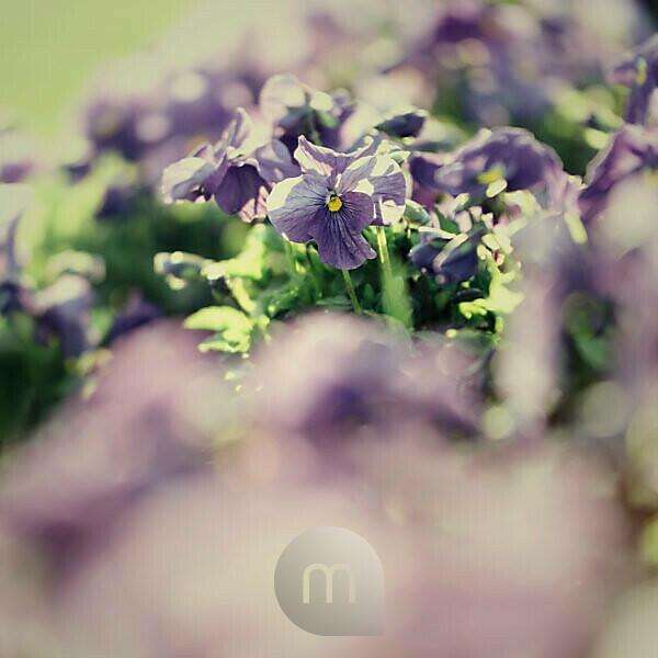 Frühling im botanischen Garten in Gütersloh,