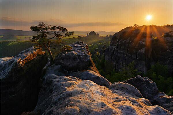Einsame Kiefer im Elbsandsteingebirge bei Sonnenuntergang im Abendlicht, Lehnriff, Sächsische Schweiz, Sachsen, Deutschland