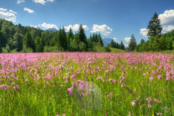 View above spring meadows on hilly landscape, Upper Bavaria, Bavaria, Germany