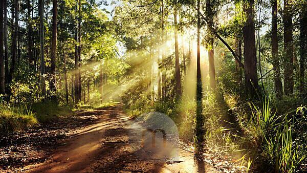 Australia, path, way, wood, light, mood, rays, back light,