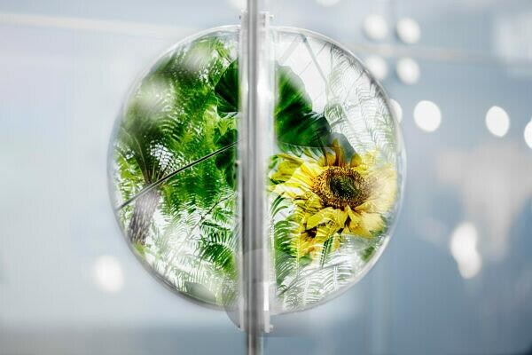 Projection, plants in glass ball