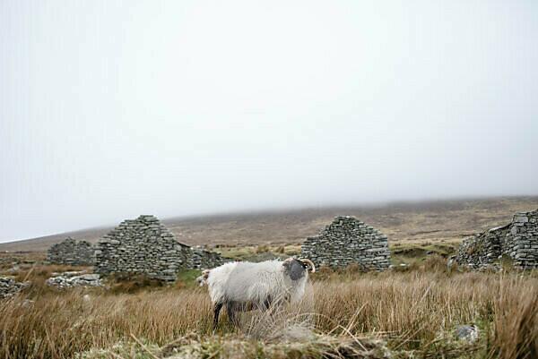 Landschaft und Ruinen in der Nähe von Galway, Irland