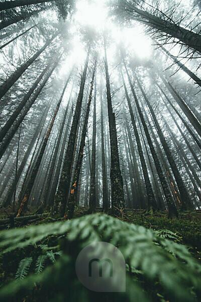 Germany, Bavaria, Allgäu, nebulous-overcast wood near lake 'Schrecksee'