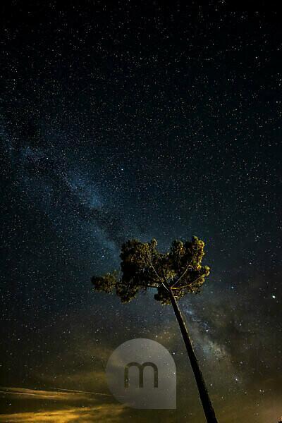 Pine tree, starry sky, on the Atlantic coast, France
