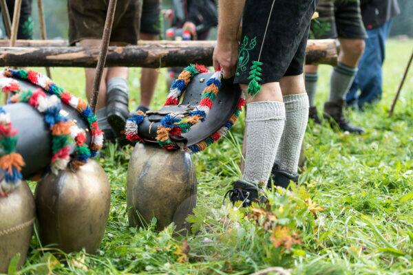 Viehscheid' after Almabtrieb (ceremonial driving down of cattle from the mountain pastures into the valley in autumn) in late summer in Bavaria, farmer in Lederhose sorts the cowbells