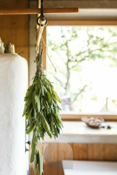 A bouquet of leaves of garden sage (Salvia officinalis) hanging on a tiled stove to dry