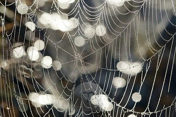Spinnennetz mit Tautropfen, close-up