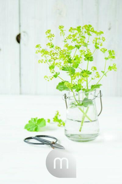 lady's mantle blossoms in a glass vase in front of white wood