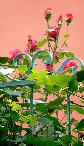 Garten, Geländer, Blume, Belgrad, Serbien