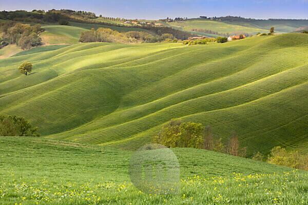 grasslands and hills, landscape of the Crete Senesi, Asciano, Siena, Tuscany, Italy