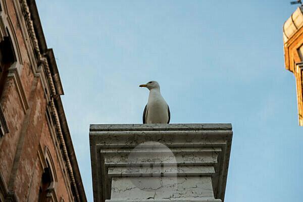 Italy, Veneto, Venice, seagull sitting on a pillar