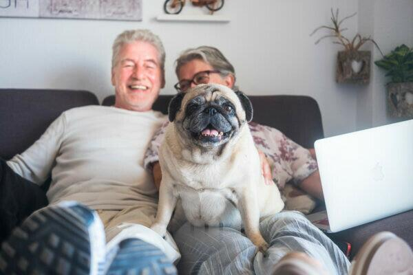 Funny family concept with couple of cheerful caucasian people senior man and woman sit down on the sofa with laptop computer and old cute pug dog sit on them looking the camera