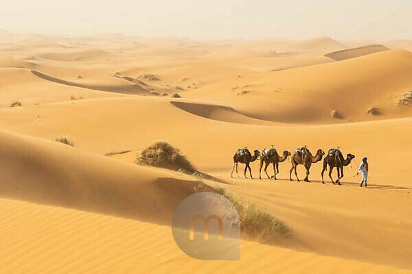Kameltrip, nördliche Sahara, Marokko