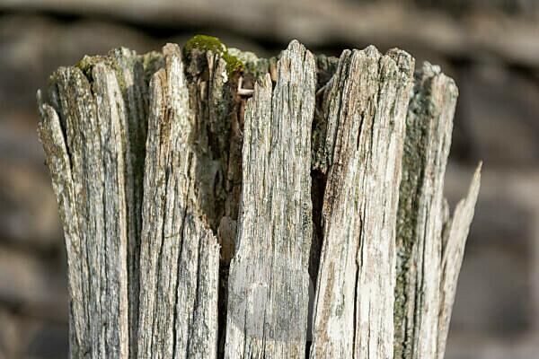 Verwitterter Holzpfosten eines Zaunes.