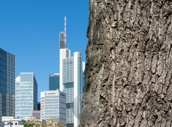 Germany, Hesse, Frankfurt, tree trunk with the skyline in the background.