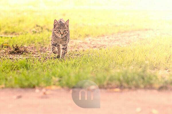 Tabby cat on exploration tour