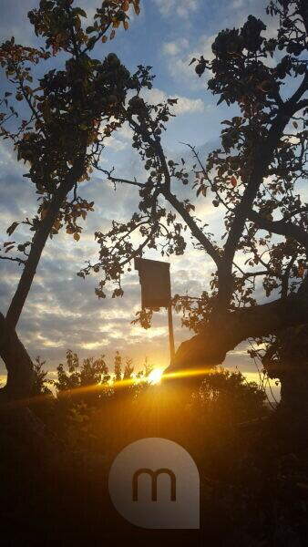 Silhouette of a birdhouse in backlight at sunset