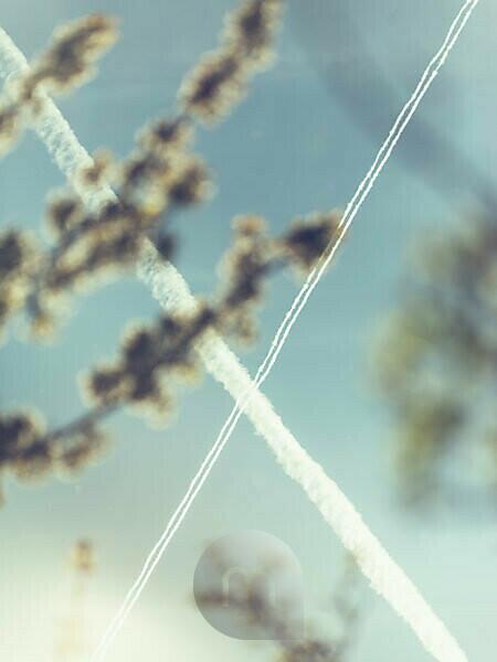 Natur Details, Zweige, unscharf im Vordergrund, Himmel, Kondensstreifen von zwei Flugzeugen überkreuzen sich