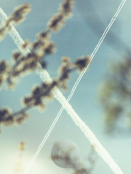 Nature details, branches, out of focus in the foreground, sky, contrails of two planes cross