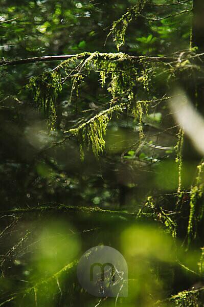 Bemooste Zweige im Laubwald, close-up
