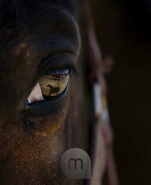 Horse, eye, close-up