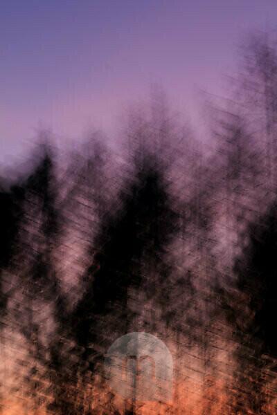 Wald bei Sonnenuntergang, verfremdet, Naturkunst