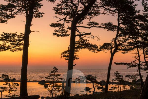 Estonia, Baltic Sea island Hiiumaa, coast, pines, silhouette in the morning red