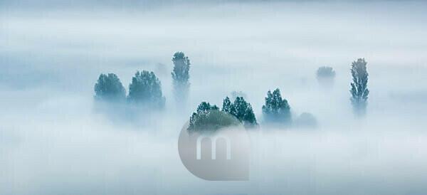 Morning fog, trees rising out of the fog, Unstruttal, Freyburg (Unstrut), Saxony-Anhalt, Germany