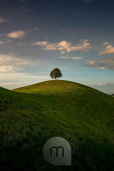 Hügelige grüne Landschaft in der Schweiz