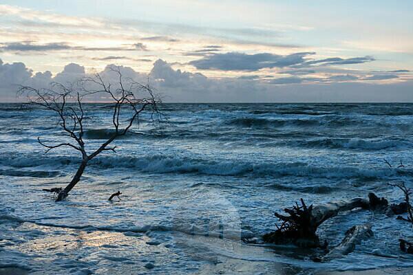 Fischland, Darß, Weststrand im Abendlicht, Sturm, Treibgut