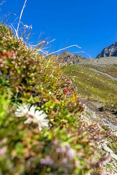 Europa, Österreich, Tirol, Ötztaler Alpen, Pitztal, Piösmes, Rüsselsheimer Hütte, Blick auf die Rüsselsheimer Hütte vor dem Geigenkamm mit Weißmaurachkopf