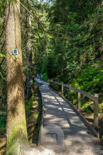Europe, Germany, Baden-Wuerttemberg, Black Forest, hiking trail around Mummelsee