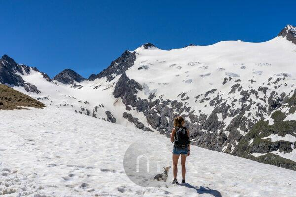 Europe, Austria, Tyrol, Ötztal Alps, Ötztal, hiker with dog on an old snow field with a view of the Rotmoosferner