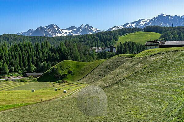 Europa, Österreich, Tirol, Ötztaler Alpen, Ötztal, Frisch gemähte Berghänge in Niederthai